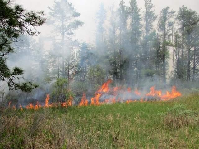 Seney wildfire