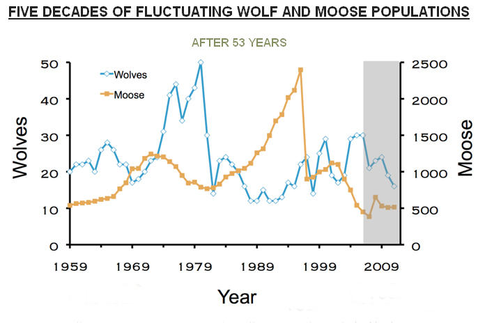 The ups and downs of the wolf and moose populations on Isle Royale. The 54 year study holds an incredible amount of data. The wolves are at their lowest point yet.