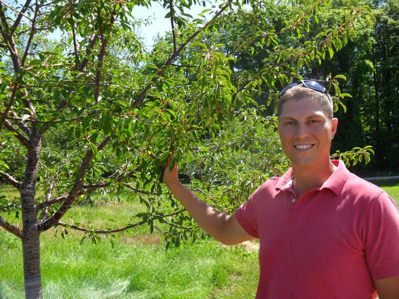 Ben LaCross manages 750 acres of cherry trees on the Leelanau Peninsula. This year some of his trees were bare of fruit when they would normally hold 50-100 pounds of cherries each.