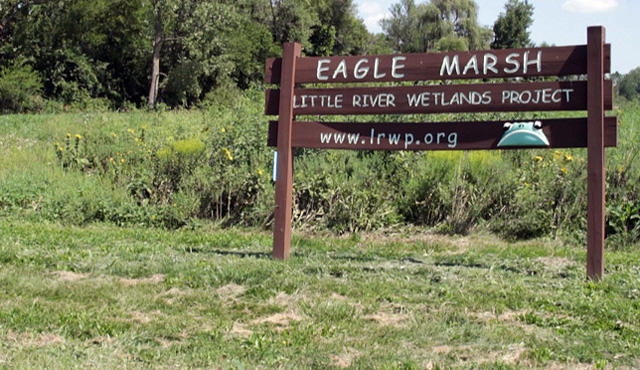 Eagle Marsh is considered by many scientists to be the second highest risk pathway for Asian carp to get into the Great Lakes.