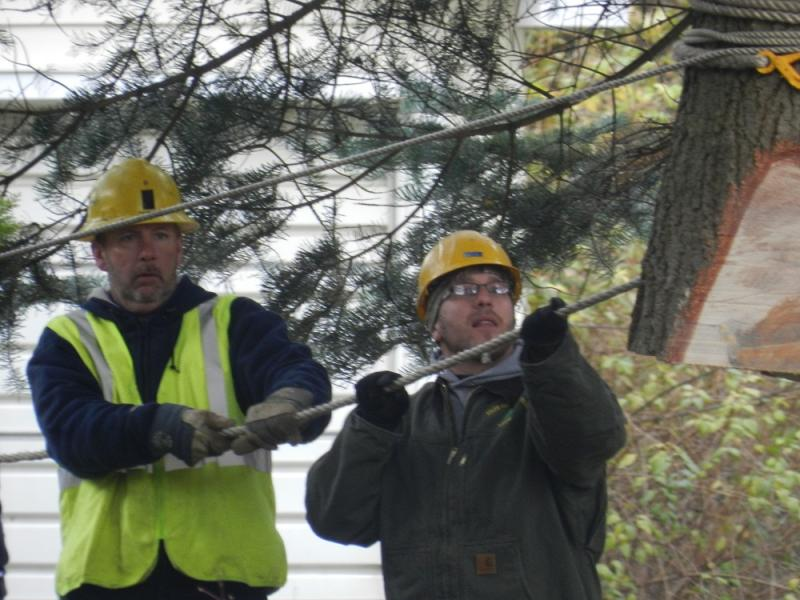 Timbermen gingerly guide the 75 high tree between two homes