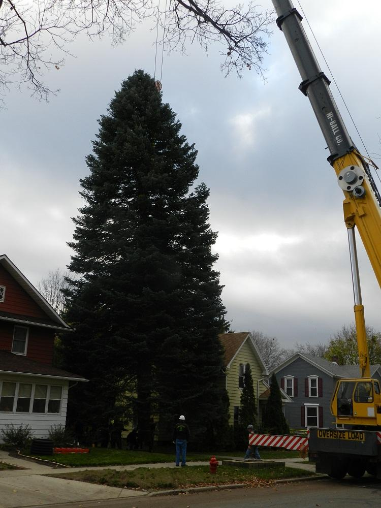 The 2012 Michigan Christmas tree is removed from its jackson home