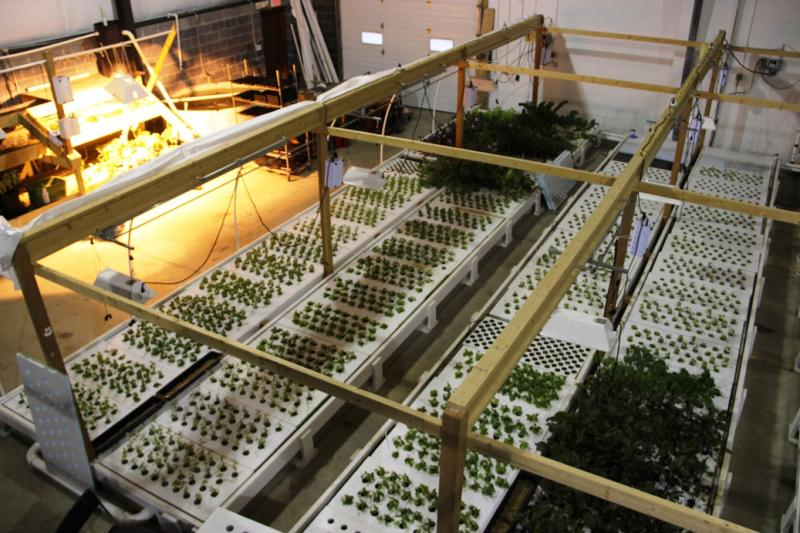 Aquaponics is a combination of hydroponics and aquaculture.