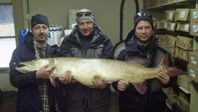 Joseph Seeberger with his world record Great Lakes muskellunge