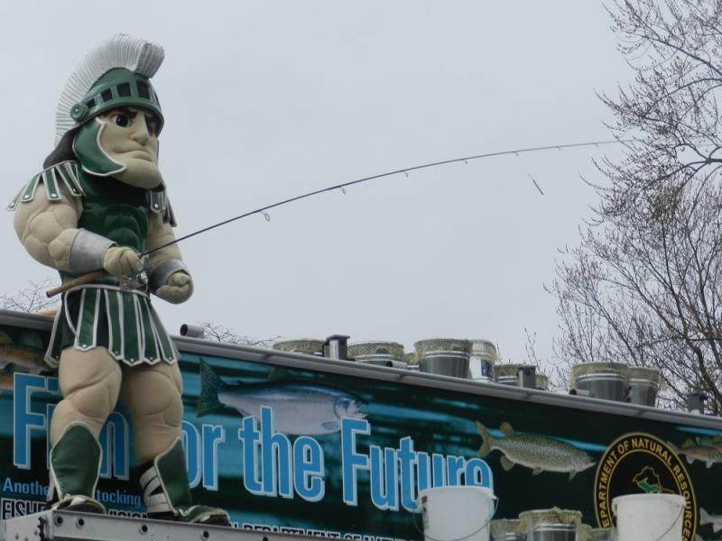 Sparty holds a fishing rod, as three thousand Steelhead trout are dumped into the Red Cedar River on the MSU campus