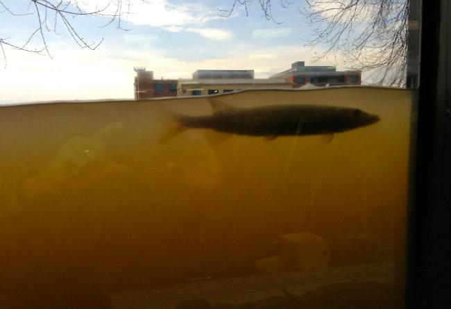 The flooded Grand River is high enough a pike can check out the offices of Anderson Eye Care Monday afternoon through the windows.