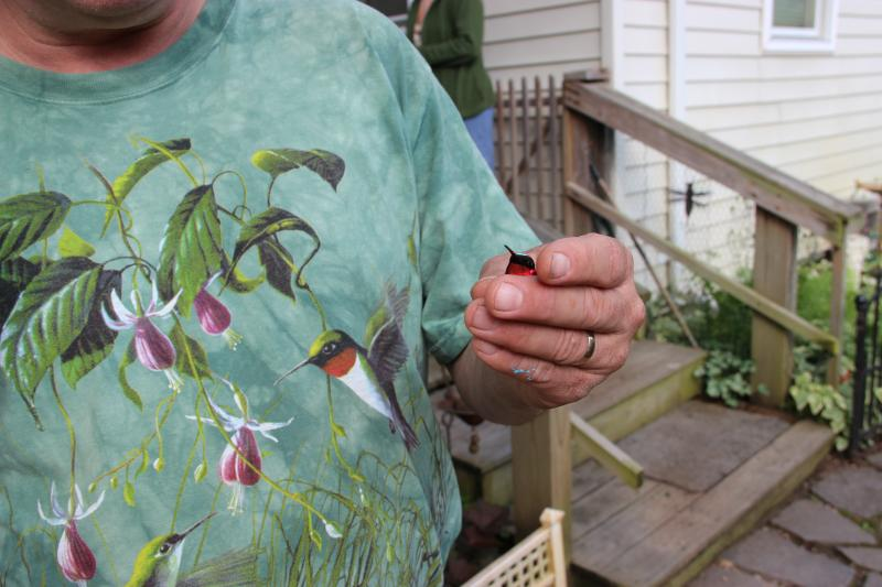 Allen Chartier holds a male ruby-throated hummingbird before releasing it.