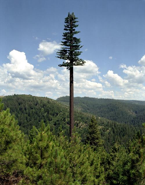 This is not just a really, really tall tree.