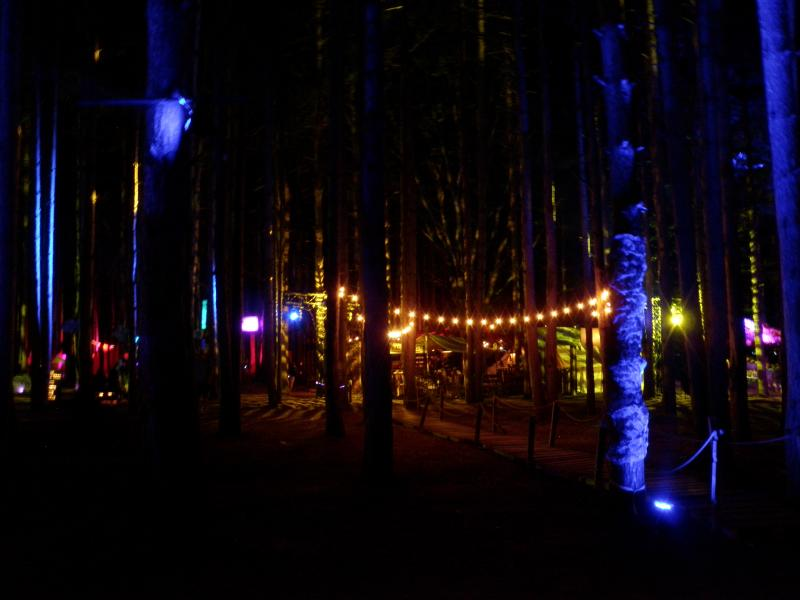 The Sherwood Forest at night