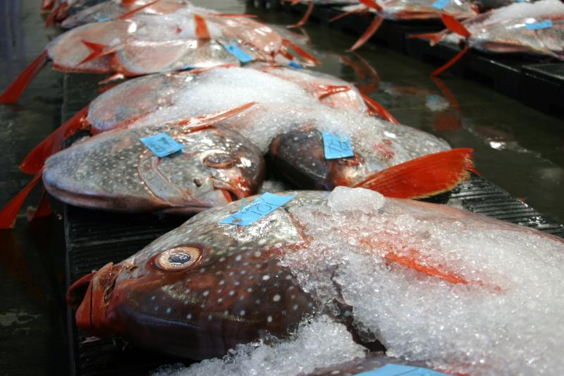 Opah, also called moonfish, at a fish auction in Hawaii. Opah were one of nine fish species analyzed in a new study that looked at how mercury gets into open-ocean fish and why the levels vary with depth.