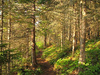 Isle Royale nature trail.