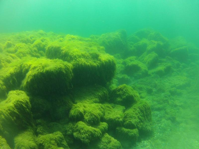 Turns out there is another reef made by human hands in Thunder Bay, unintentionally. Researchers think this structure was created when shipping channels were dredged and the material was dumped out in the bay.