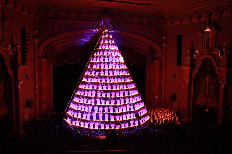 Nearly 25,000 lights brighten up the tree.