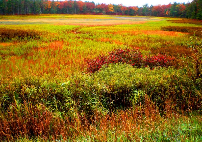 Wetlands in the fall near Paradise, Michigan.