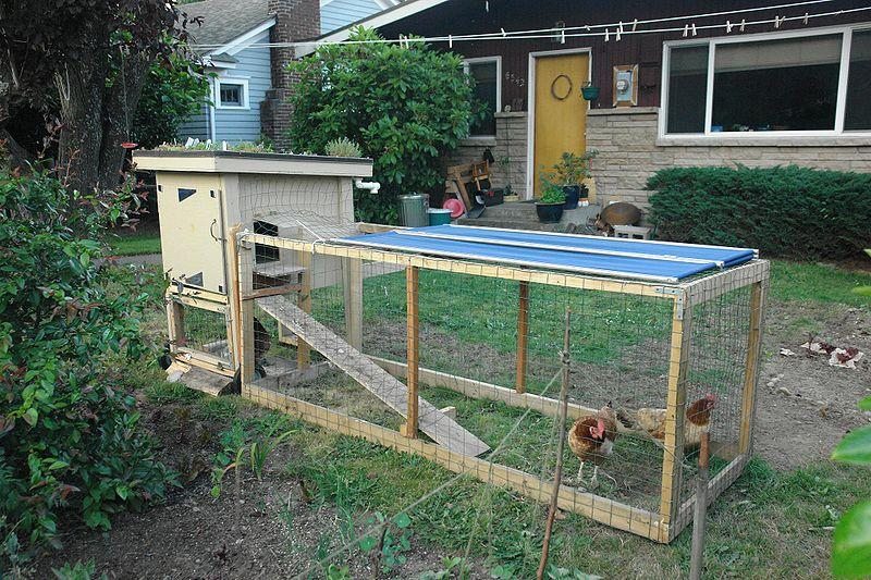 Chickens Backyard the new right-to-farm requirements and backyard animals | michigan radio