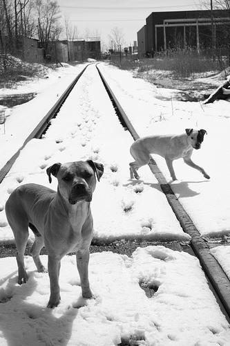 Researchers attempt to nail down the real number of stray animals in Detroit.
