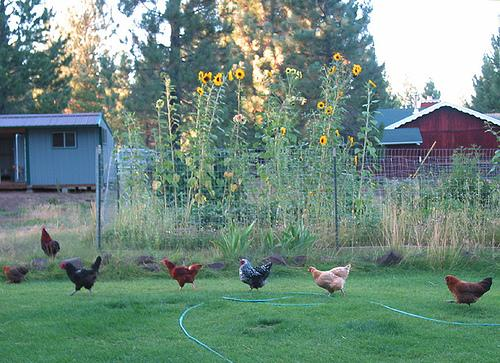 A final decision on backyard farms is expected next month.