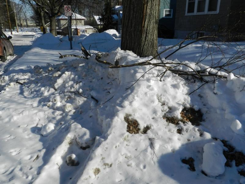 When a late December ice storm ripped through mid-Michigan, falling tree branches knocked out power to tens of thousands of homes in Lansing.  The power's back on, but many of the tree branches remain buried by the snow that has fallen since.
