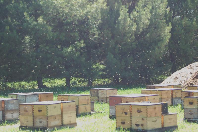 Honeybees fly above an apiary at Sleeping Bear Farms in Benzie County.