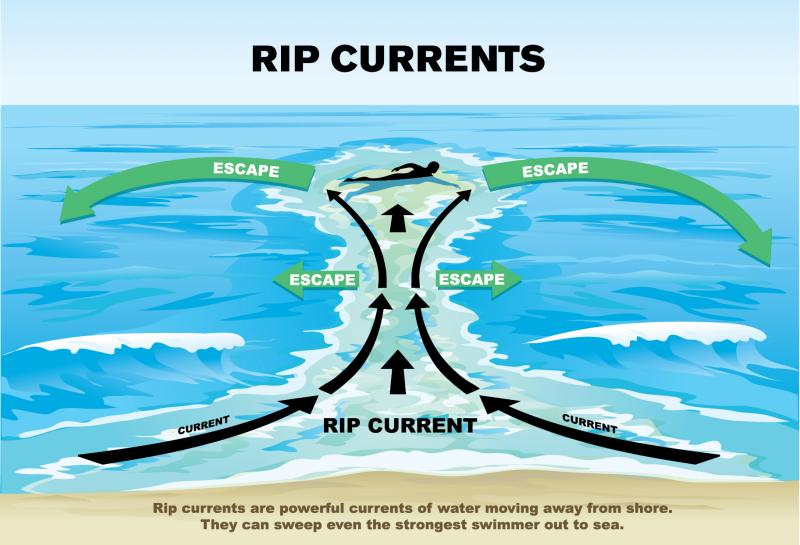 According to the Michigan Sea Grant, rip currents will not pull a swimmer under the water, but will carry them out to the open water, away from shore.