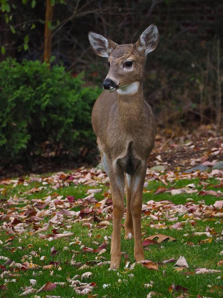 Baby the deer.