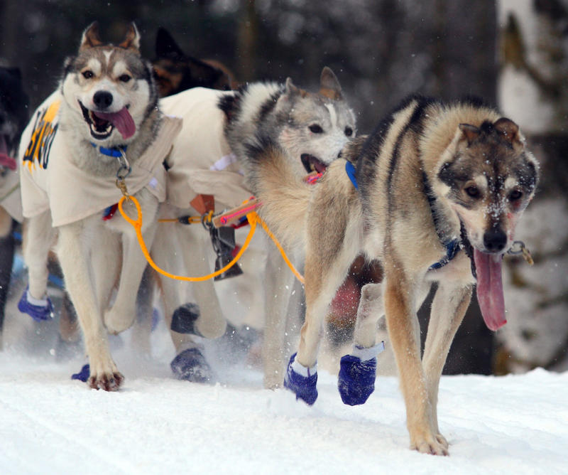 Early snowfall and cold temperatures are causing a hold up on dog sled training in the Upper Peninsula.