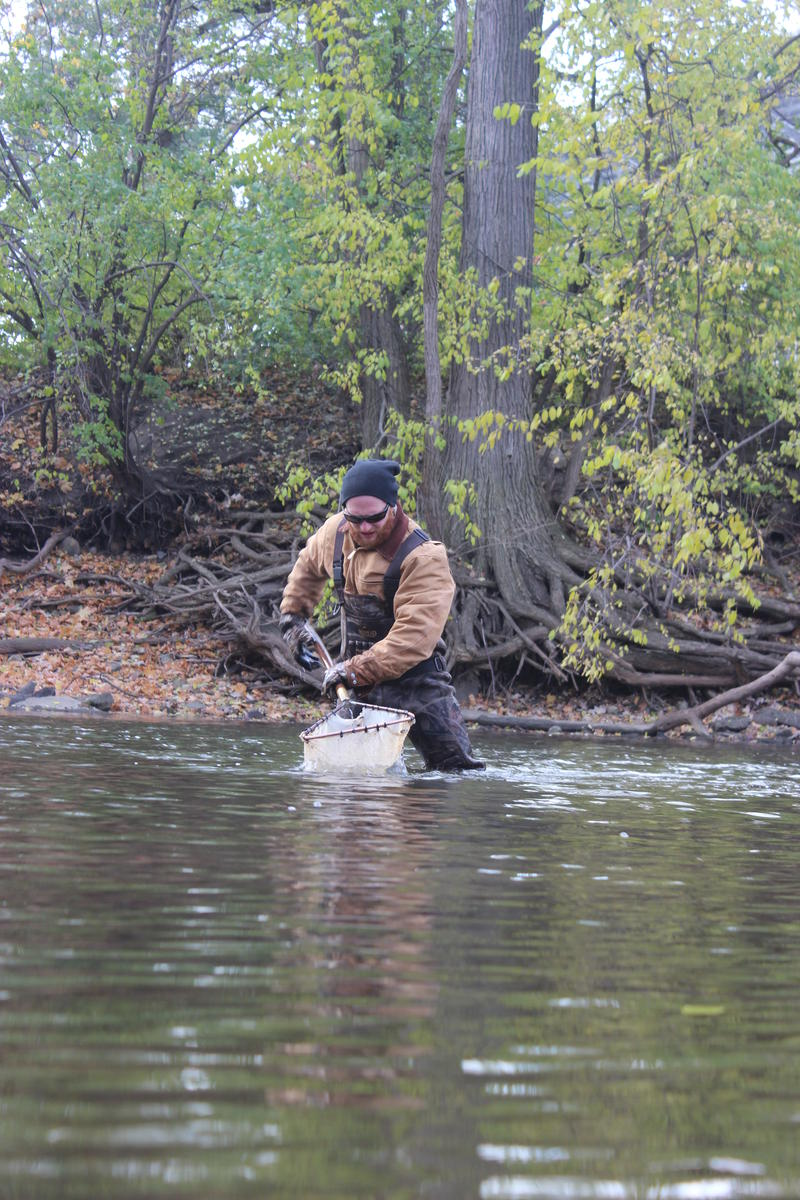 Kelly Smith is a graduate student at Michigan State University. Here, he's catching crayfish.
