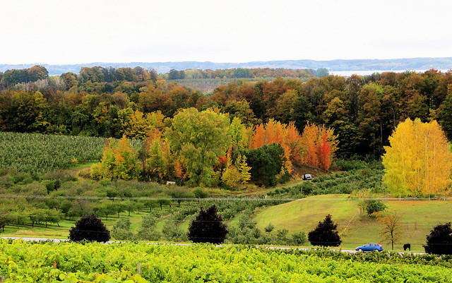 Traverse city vineyard