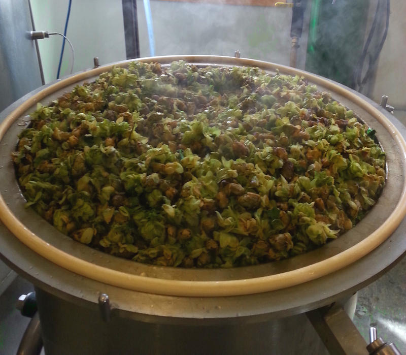 Hops are processed in a boil kettle during the beer brewing process.
