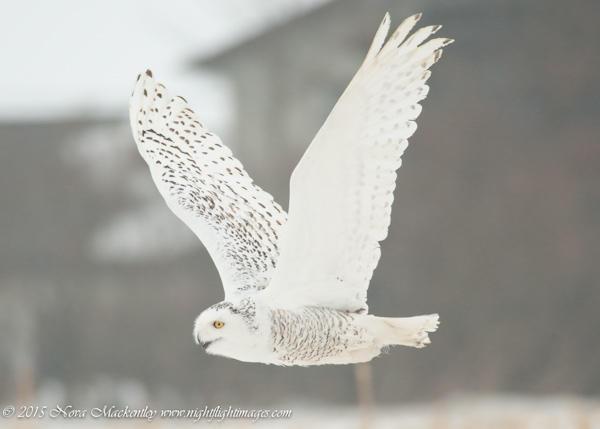Prairie Ronde in flight