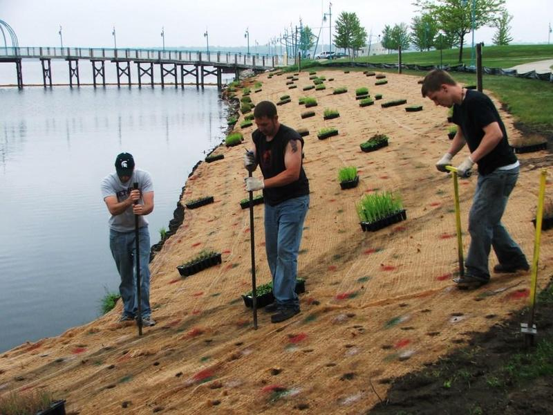 Workers installing native plants as part of shoreline restoration on Muskegon Lake, Muskegon, MI
