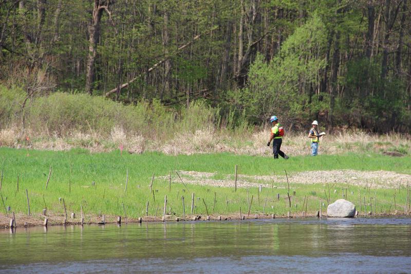 Enbridge contractors monitor vegetation along the restored river banks.