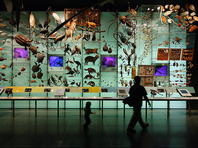 An exhibit at the American Museum of Natural History displays the science behind evolution.