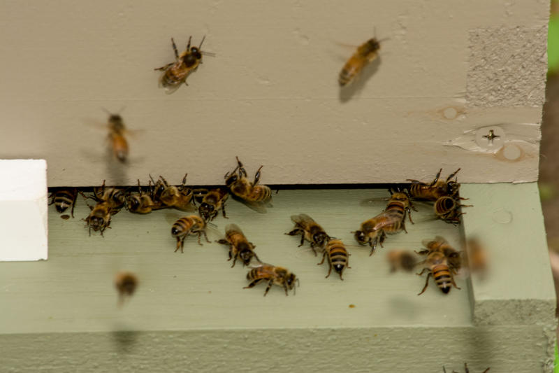 A small portion of the 8,000 bees.