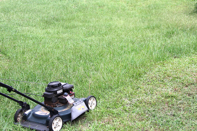 Mowing strip costs what that