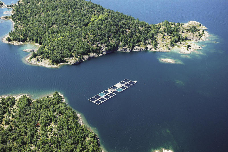 Michigan is toying with the idea of building open-water fish pens, like this one in Ontario.