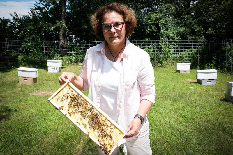 Maryann Frazier, a researcher at Penn State's Center for Pollinator Research, checks on one of her experimental honey bee hives. Frazier is testing the effects of pesticides on honey bee colonies.