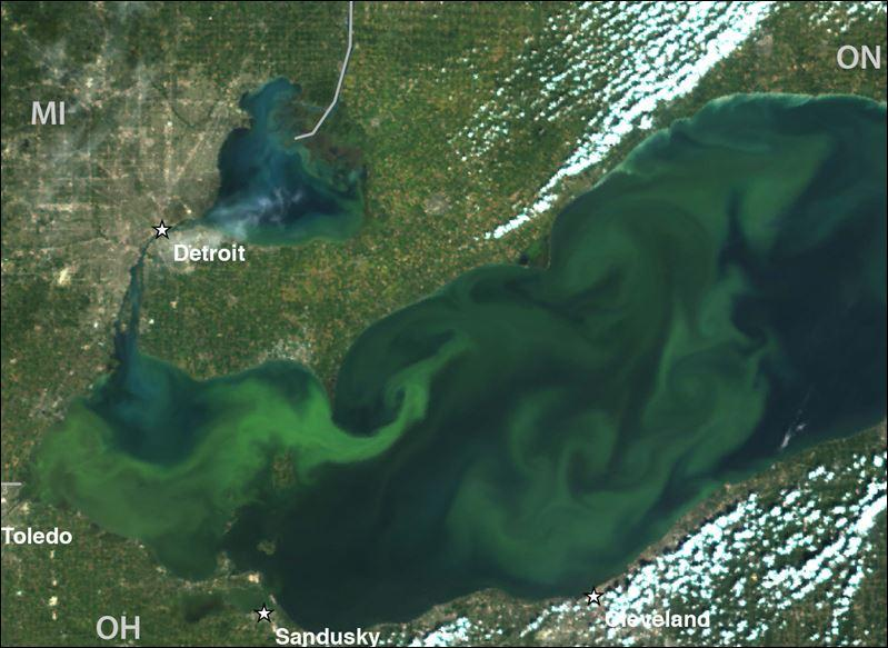 An aerial view of algae blooms in Lake Erie.