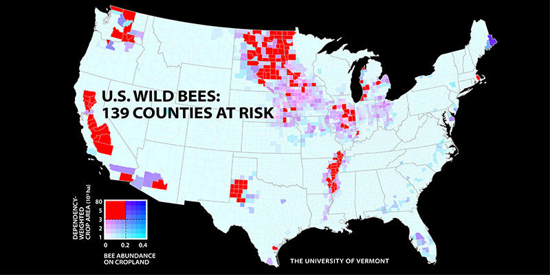Where the wild bees arent New map shows serious shortages
