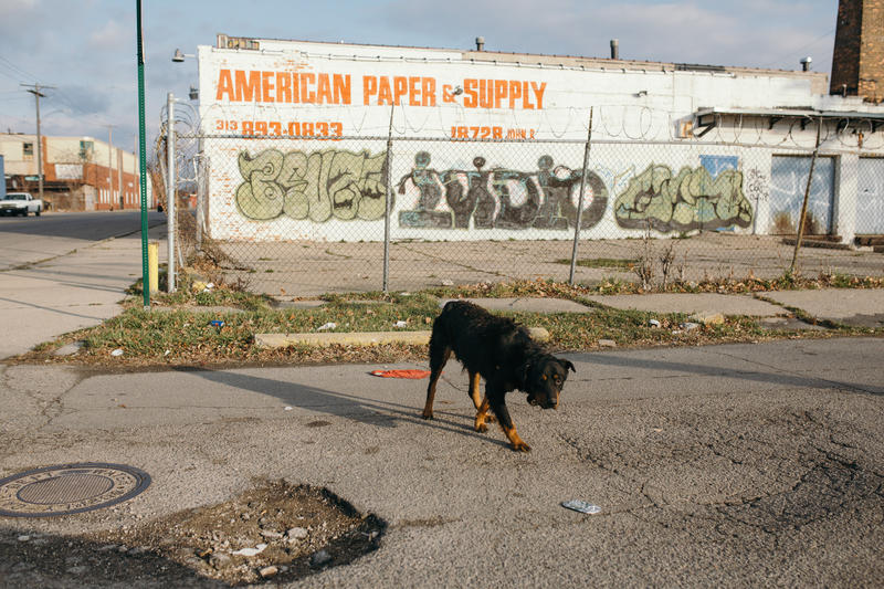 A feral dog roams the streets near John R. and Goldengate St. looking for food.