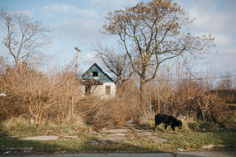A feral dog passes an abandoned home south of 7 Mile on Goldengate St.
