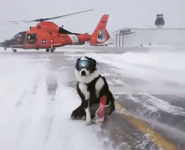 This image of Piper sitting courageously on the airport runway as a helicopter rolls past garnered the attention over 3 million people on Reddit.