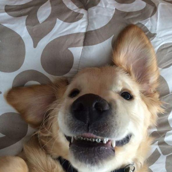 Apparently puppy braces are a thing.