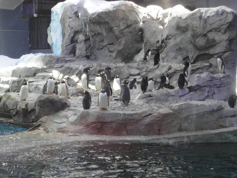 The center has 69 current residents; the final group of King penguins will arrive soon.