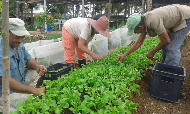 Finca Marta organic farm in Cuba