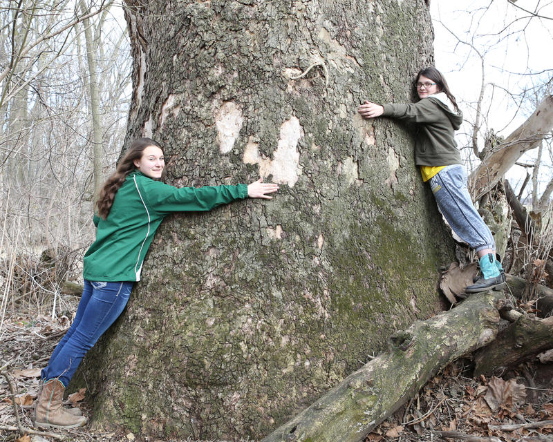 Kindell Covey, left, and her sister Denae Covey with the giant sycamore that got Kindell the grand prize in the Michigan Big Tree Hunt