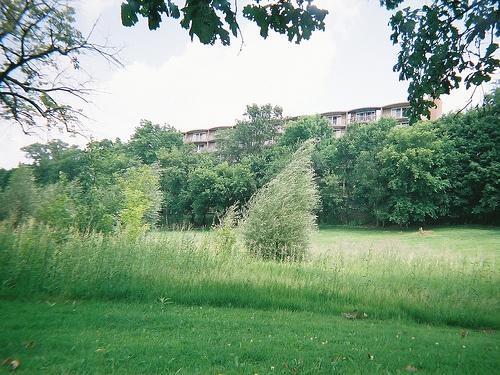 West Park, Ann Arbor