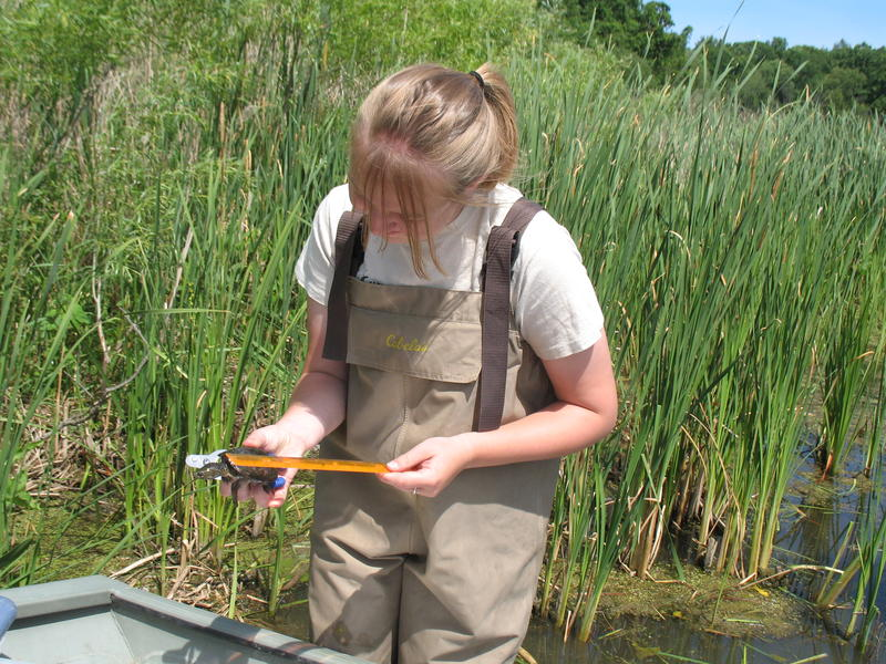 Notre Dame student researcher, Dayna Smith, taking measurements on a Lake Michigan turtle