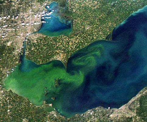 Cyanobacteria bloom in Lake Erie