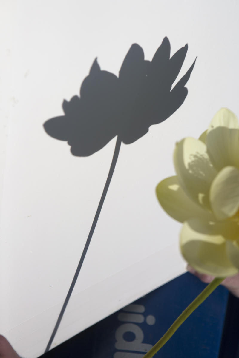 The shadow image of the American lotus that Kramer captured.
